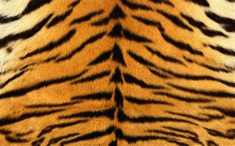 Animal Skin Wallpaper - tiger print skins tiger print backgrounds