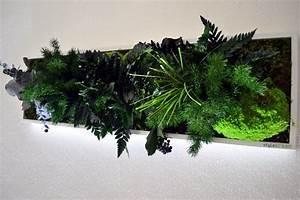 Künstliche Pflanzen Wie Echt : wandschmuck konservierte pflanzen an der wand ohne ~ Michelbontemps.com Haus und Dekorationen