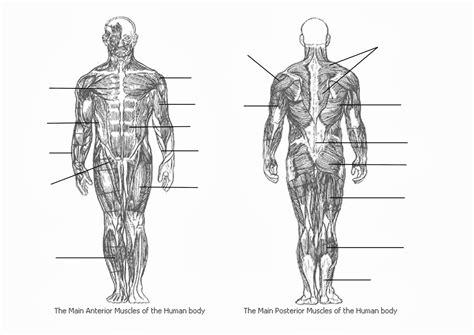 Muscle diagram male body names. Muscle Diagram Blank - koibana.info | Muscle diagram ...