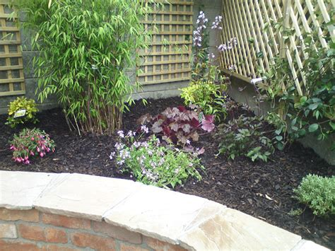planting schemes for small gardens new small garden milltown dublin 6 greenacres landscapes