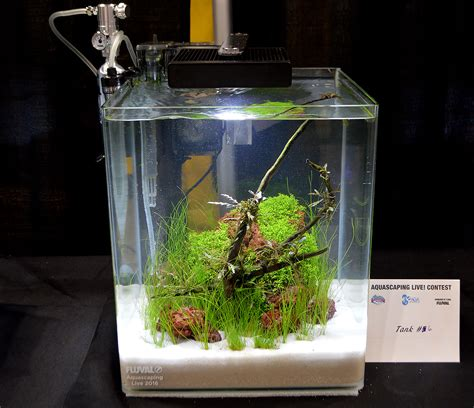 Small Tank Aquascaping by Aquascaping Live 2016 Small Planted Tanks