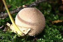 Pilze Im Garten Gefunden by Pilze Im Garten Gefunden Hat Jemand Ahnung Allgemein