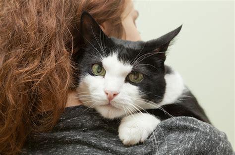 fiv in cats feline leukemia archives petguide