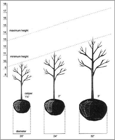 illustration of how to 39 size 39 a tree