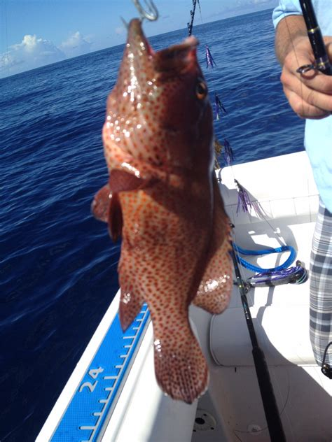 grouper different species fishing able need fish offshore saturday bottom report reply thehulltruth