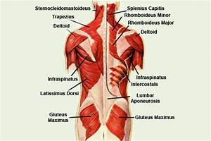 Verrekte spier schouderblad