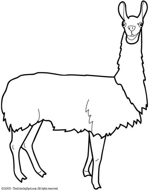 pics  llama head drawing animal coloring pages