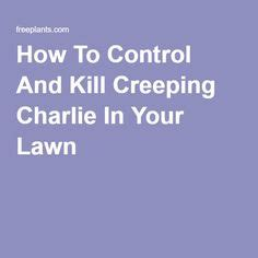 how to kill creeping lawn care and lawn on pinterest