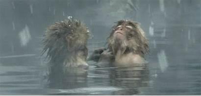 Africa Backgrounds Riseingsouthernstar Wildlife Animal Skins Mirror