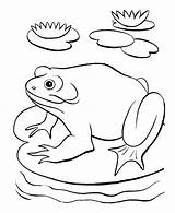 Pond Coloring Frog Pages Printable Animals Toad Adults Animal Getcolorings Stpetefest Popular sketch template
