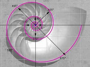 Wachstumsfaktor Berechnen : logarithmische spiralen rsg wiki ~ Themetempest.com Abrechnung