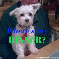 thundershirt  dogs product review caring