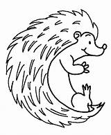 Hedgehog Coloring Pages Porcupine Cute Colouring Hedge Baby Printable Drawing Hedgehogs Getcoloringpages Sheet Hogs Lesson Realistic Printables Printablecolouringpages Larger Credit sketch template
