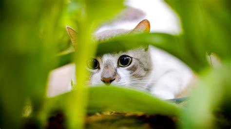 50 Beautiful Cats Full Hd Wallpapers 1080p.rar