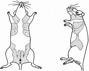 Biology Of The Laboratory Mouse