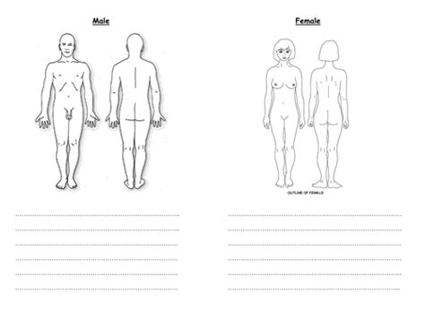 differentiated puberty body  worksheets