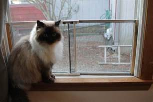 cat proof window screens cat proof window screens a guide