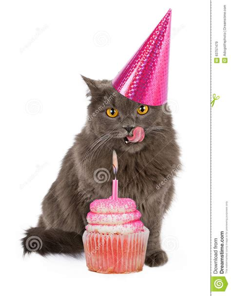 happy birthday party cat  pink cupcake stock image