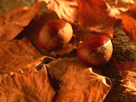 seasons fall fruits wallpaper