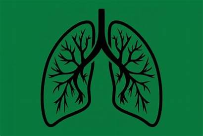 Lungs Clipart Lung Icon Asthma Clip Treatment