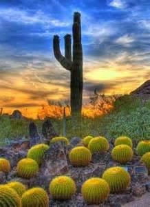Scottsdale Arizona Cactus