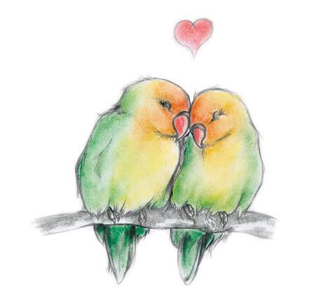 drawn lovebird pencil   color drawn lovebird