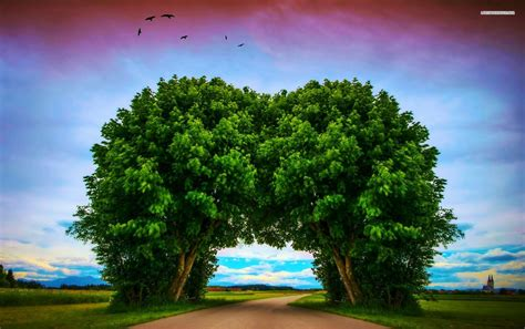 lovely tree tunnel wallpapers lovely tree tunnel stock