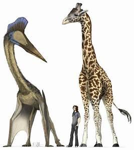The largest pterosaurs – Top 10 | DinoAnimals.com  Quetzalcoatlus