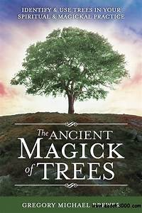 The Ancient Magick Of Trees  Identify  U0026 Use Trees In Your