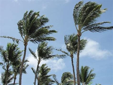 palm trees swaying   breeze   property