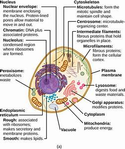 Plant Cell Parts Functions