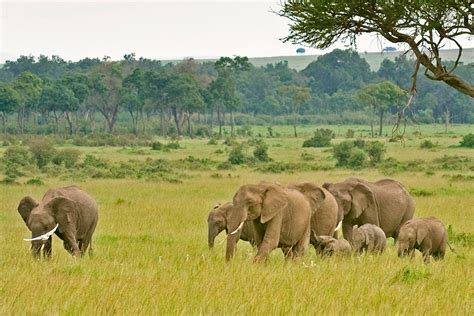 Serengeti Camping Safari — Agama Tours and Safaris