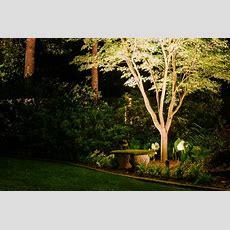 Landscape Lighting Showcasing Your Garden At Night