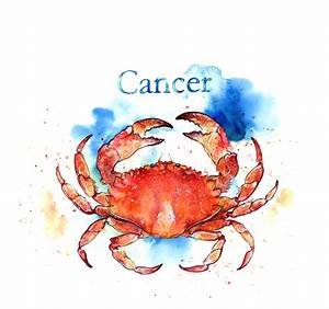 Amy Holliday Illustration : Starsigns 2012: Cancer Crab ...