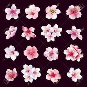 Fleur De Cerisier Tatouage : dessin fleur cerisier ensemble de diff rentes belles ~ Dode.kayakingforconservation.com Idées de Décoration