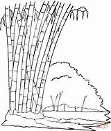 Bamboo Coloring Jungle Trees Printable Panda Forest Tree Drawing Eating Leaves Sitting Natural Coloringpages101 Sheets Coloringbay Getdrawings Supercoloring Mitraland Colourings sketch template
