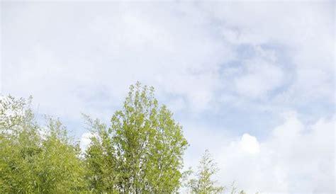 chaumont sur loire chambre d hotes festival international des jardins une oasis de verdure