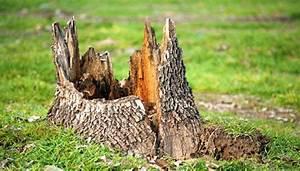 Baumstumpf Entfernen Hamburg : baumstumpf entfernen am besten im herbst vor dem ersten frost ~ Lizthompson.info Haus und Dekorationen