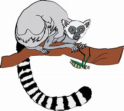 Lemur Clipart Clip Ring Tailed Cheat Vector