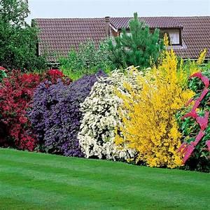 la haie fleurie idees creatives pour l39exterieur With jardin paysager avec piscine 9 une haie autour de votre piscine 187 piscine