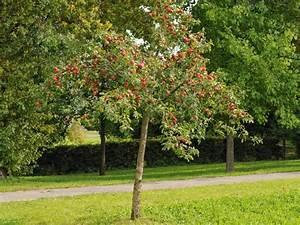 Kleiner Baum Mit Breiter Krone : kleinb ume der kleinbaum ~ Michelbontemps.com Haus und Dekorationen