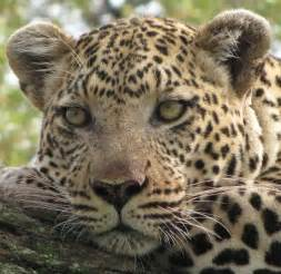 ... Worldwide Blog: Customer Comment: Jan S. Botswana Wildlife Holiday Botswana