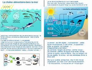 La Chaine E : chaine alimentaire marine yc93 jornalagora ~ Medecine-chirurgie-esthetiques.com Avis de Voitures