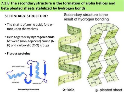 ib biology 2 4 7 3 slides proteins