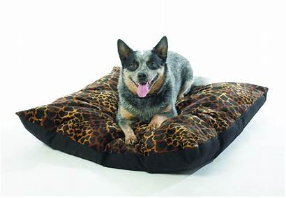 Pets Dog Australia Western Insects Animals Cats