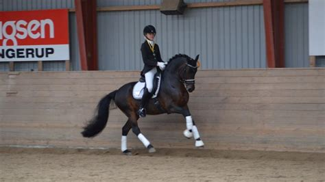 dressage pony fei