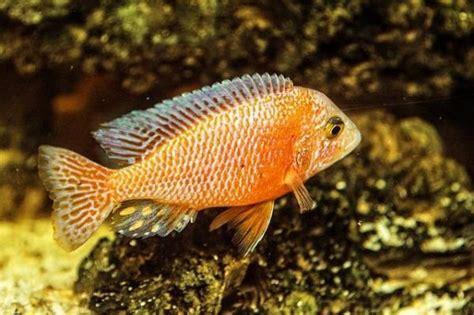 common aquarium fish diseases onehowto