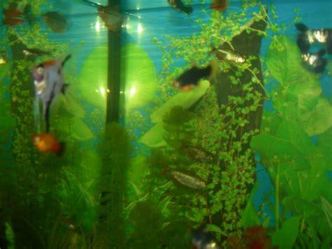 mon aquarium d eau chaude