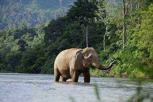 Indonesia's Rainforests: Biodiversity and Endangered ...