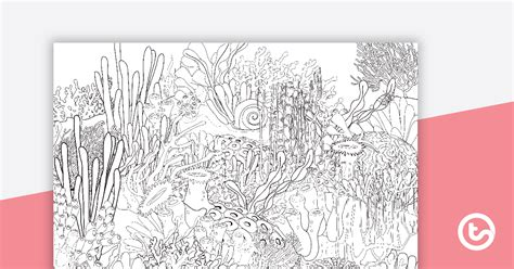 great barrier reef colouring  activity sheet teaching